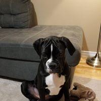 Charlie - 4 Months old